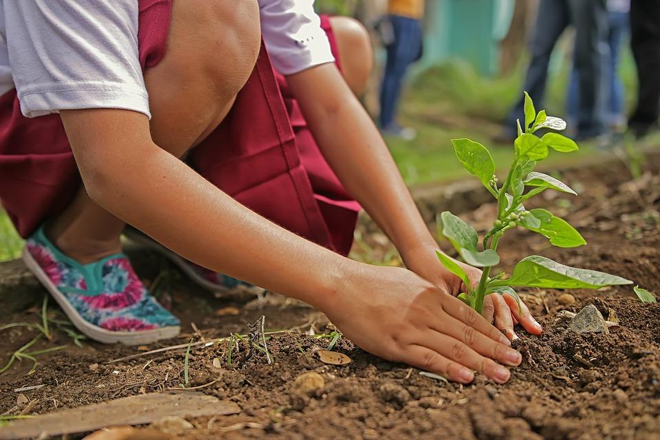 Pour l'aménagement de votre jardin, faites appel à un spécialiste compétent